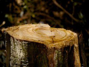 stump-66362_960_720